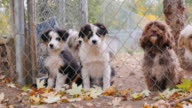 Lovely Havanese breed puppies look through the kennel or shelter fence video