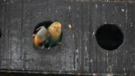 Lovely parrot video