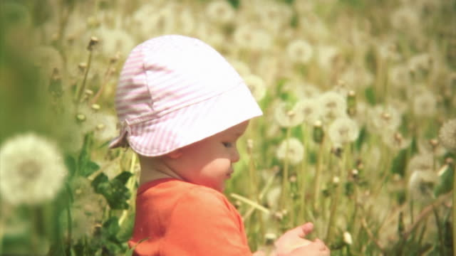 Lovely scene with a baby surrounded by dandelions. HD video