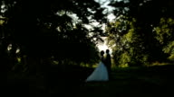 Lovely wedding couple softly kissing in a green summer forest video