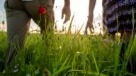 CU TS Loving Couple Walking In The Poppy Field video
