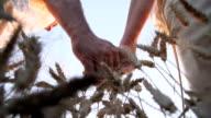 HD SUPER SLOW-MOTION: Loving Couple Walking In Wheat Field video