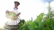 Low angle African business woman harvesting herbs video