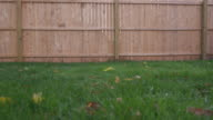 Low Angle Grass New Fence Move Left and Right video