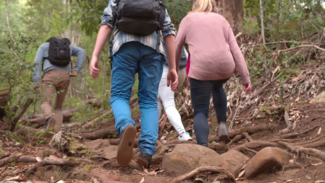 Low angle rear view of family walking through forest video
