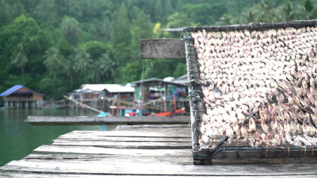 low angle view :many squid is dried under sunlight on  grille video