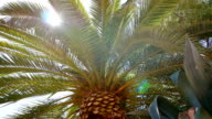 Low angle view of a palm tree with sunlight amidst its leaves video