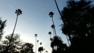Low angle view of palm trees on the streets of LA video