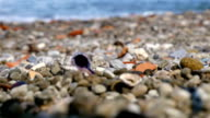 Low angle view of sea shore with saeshells and stones, change of focus video