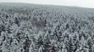 Low flight above winter forest on the north, aerial view. video