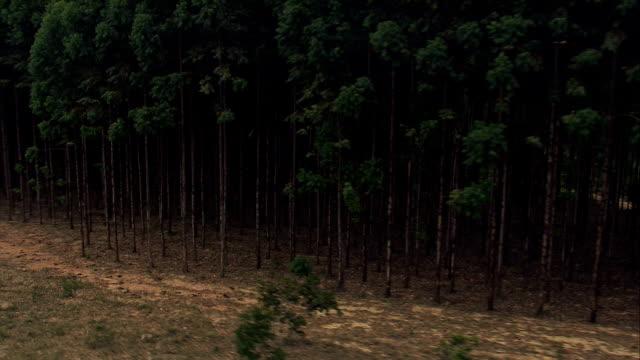 Low Past Eucalyptus Plantation  - Aerial View - Minas Gerais, Felixlândia, Brazil video