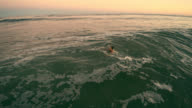Low-altitude closeup aerial footage of the young man swimming in the stormy ocean at sunset. video