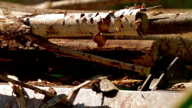 Lumber factory Conveyors of logs sorting machine video