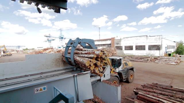 Lumber industry Conveyors of logs sorting machine video