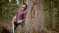 Lumberjack cutting a tree in forest video