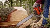 SLO MO Lumberjack cutting fallen tree trunk with chainsaw video