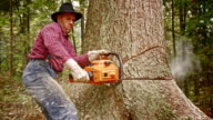 SLO MO Lumberjack cutting into the tree with a chainsaw video