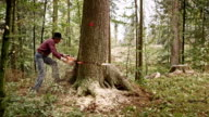 Lumberjack felling a tree with chainsaw video