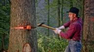 Lumberjack hitting wedges in the tree trunk video