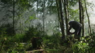 Lumberjack is Felling Tree with Chainsaw video
