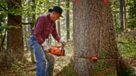 SLO MO Lumberjack making a cut with chainsaw video