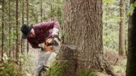 Lumberjack making a horizontal cut into tree with chainsaw video