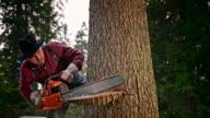 SLO MO Lumberjack making a horizontal cut with chainsaw video