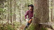 Lumberjack making cuts into a tree with chainsaw video