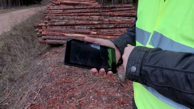 Lumberjack using tablet near the log pile video