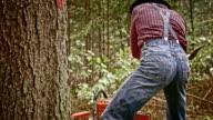 Lumberjack wedging a tree video