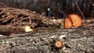 Lumberjacks at sawmill video
