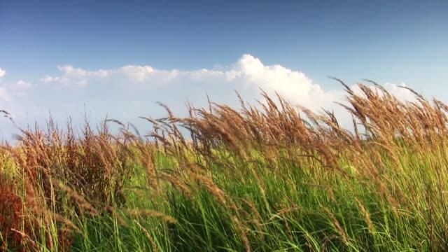 Lush grass video
