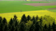 AERIAL: Lush green and yellow fields in vast countryside farmland on sunny day video