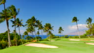 Lush Green Golf Course, Tropical Beautiful Palm Tree and Sky Landscape video