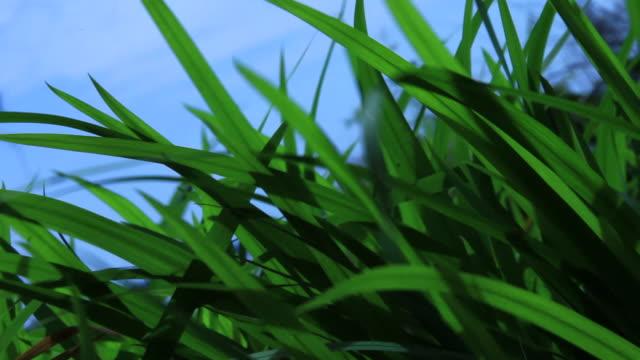 Lush green grass video