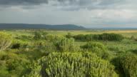 AERIAL: Lush landscape in Africa video