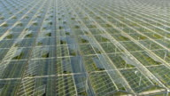 CLOSE UP: Lush vegetables growing in beautiful modern horticultural glasshouses video