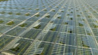 CLOSE UP: Lush vegetables growing in stunning modern horticultural glasshouses video