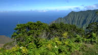 Lush vegetation on high mountain top overlooking volcanic valley and blue ocean video