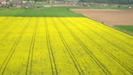 AERIAL: Lush yellow oilseed rape and green wheat on bio agricultural farmland video