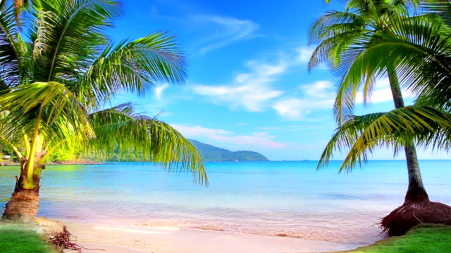 Luxury tropical beach. video