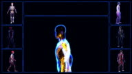 Lymphatic System video
