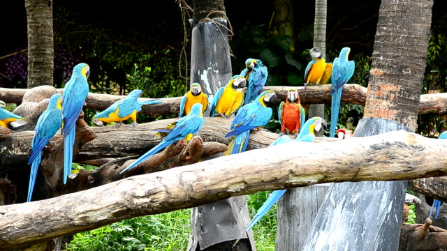 Macaw in the nature video