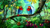 Macaw Parrot video