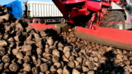 Machinery for loading and processing of sugar beet video