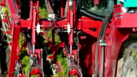 Machinery specialized for harvest carrots video