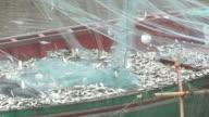 Mackerel Fishing : HD Slow motion video