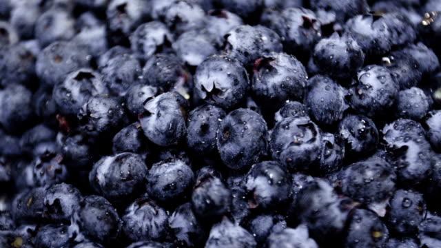 Macro closeup shot of a batch of fresh, ripe blueberries video