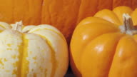 Macro Dolly in Towards Fall Pumpkins video