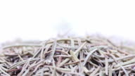Macro dried rosemary, loopable video
